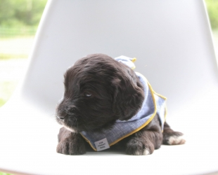 Smalls-Male-Reserved
