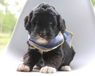 Benny-Male-Reserved